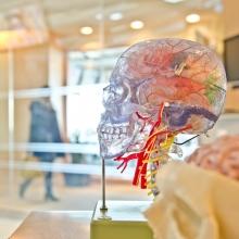Neuromarketing gelingt durch Recherche und Teamwork